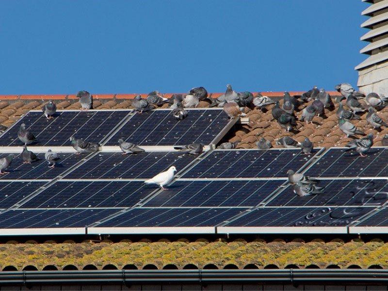 limpiar_placas solares